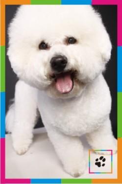 Фото профессиональная стрижка собак